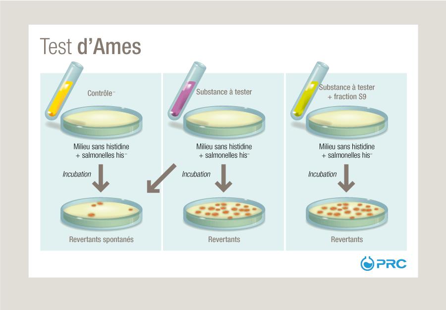 Test d'Ames